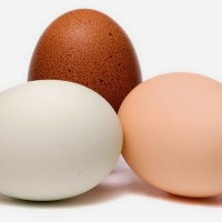 whey-vs-egg-protein